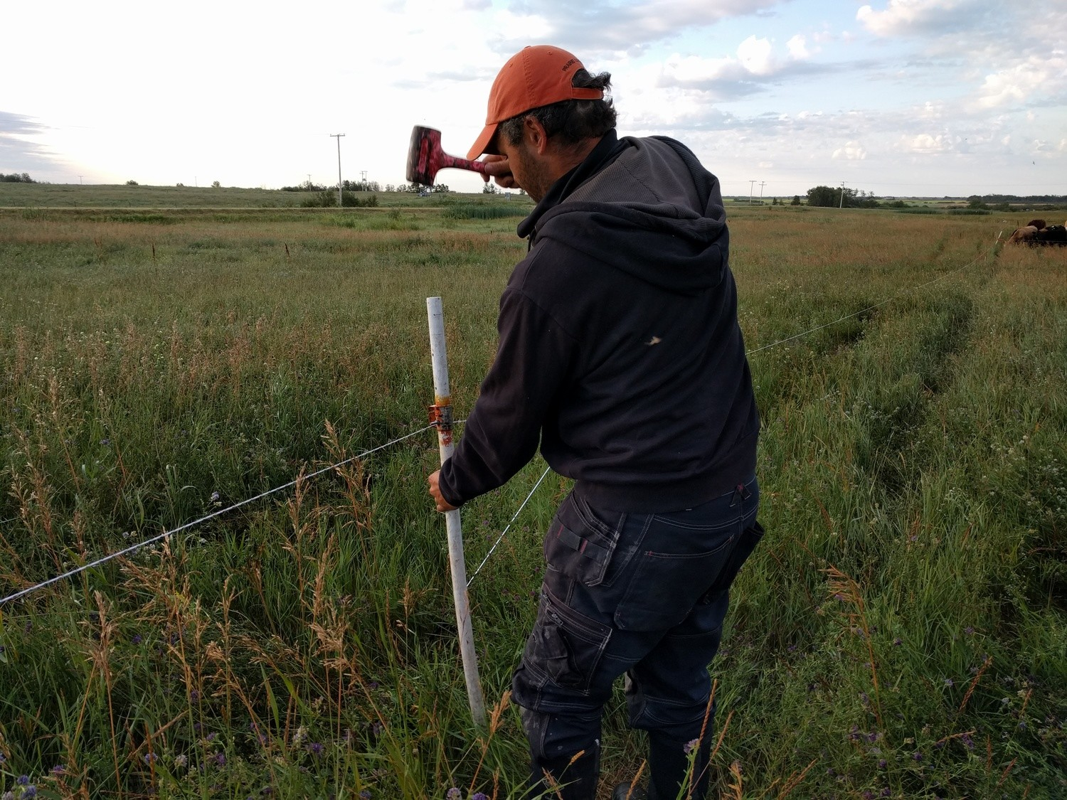 Subdividing Your Way to Healthier Grass and Higher Profits