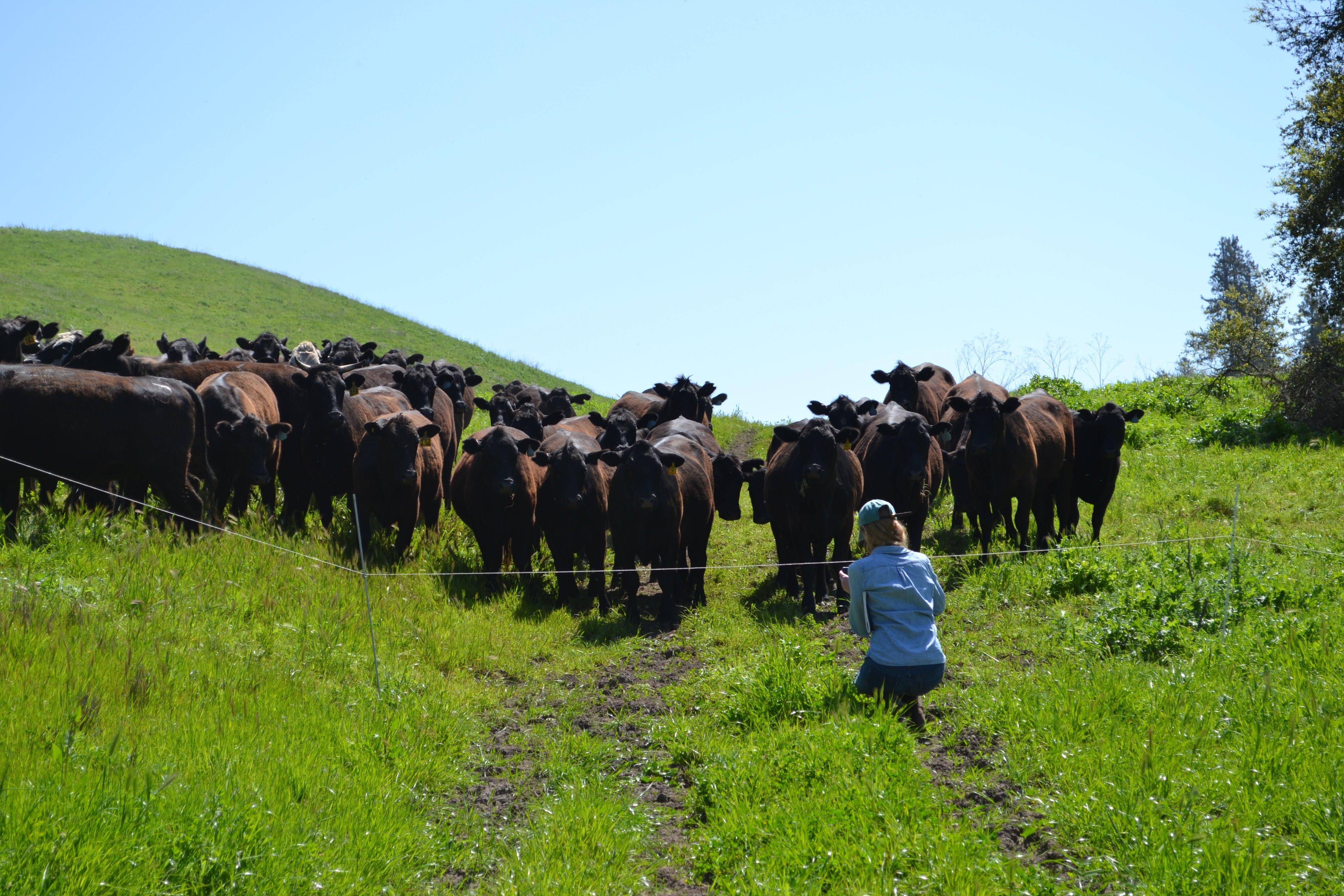 Profitable ranchers are critical to healthy grasslands.